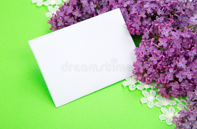 Lila púrpura en un fondo del papel verde claro foto de archivo libre de regalías