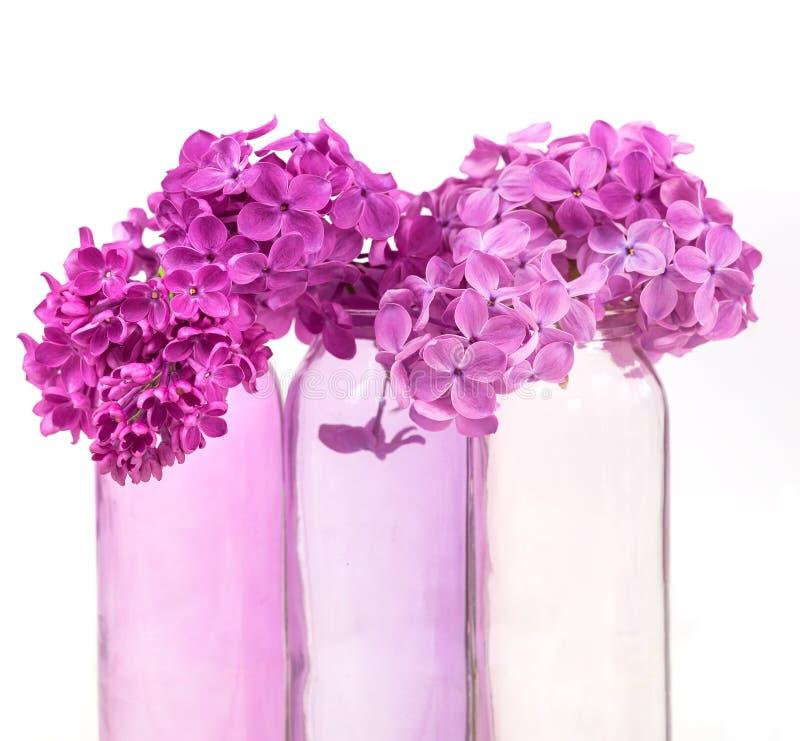 Lila rosada en floreros rosados fotos de archivo