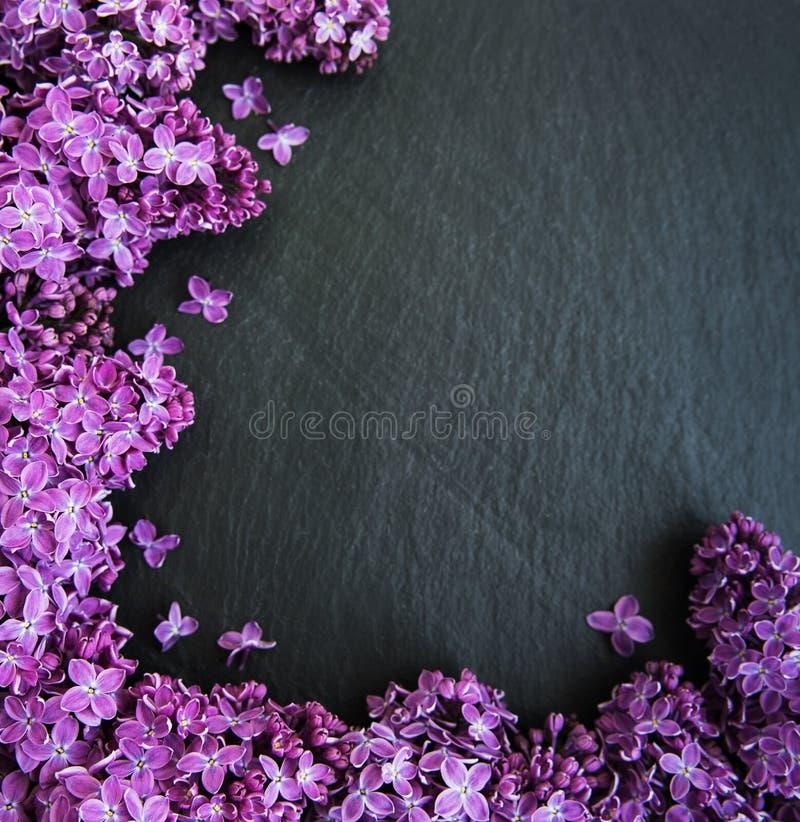 Lilablommor som en ram arkivfoto