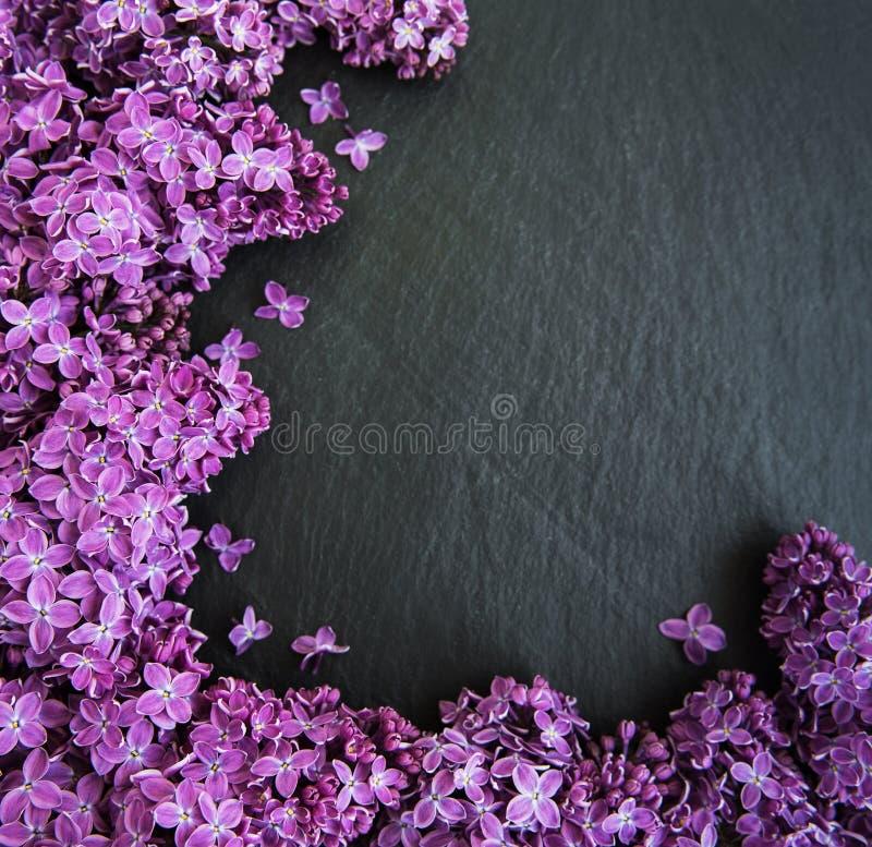 Lilablommor som en ram royaltyfria bilder