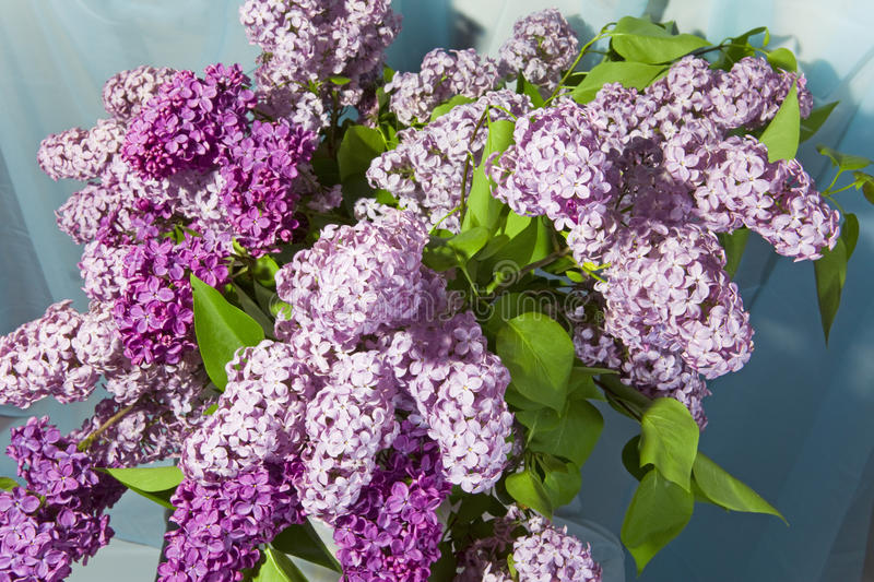 Download Lilac stock image. Image of decor, flower, bush, meadow - 12287667