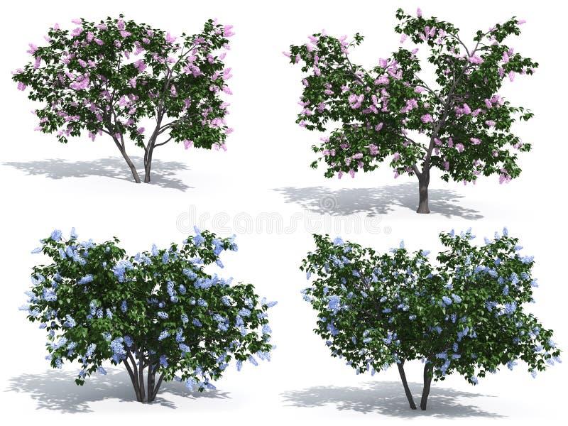 Lilac ilustração royalty free