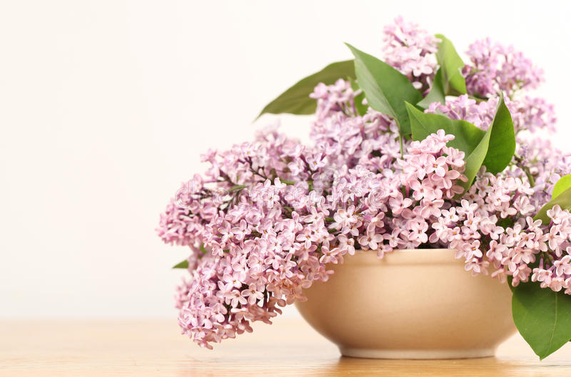 Download Lilac stock photo. Image of flower, season, blooming - 23109538