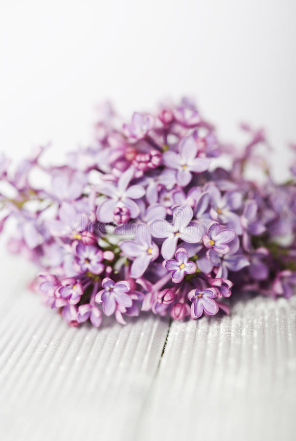 Download Lilac Stock Image - Image: 27000231