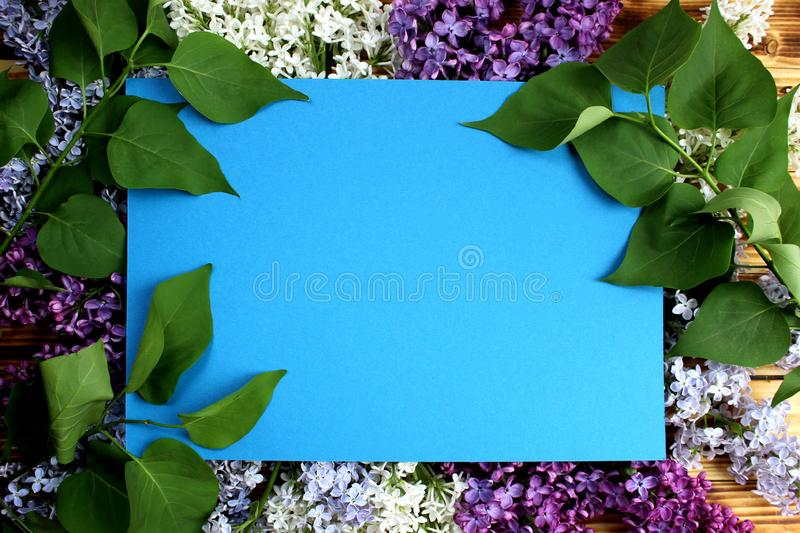 Texture frame of leaves and flowers of lilac stock image
