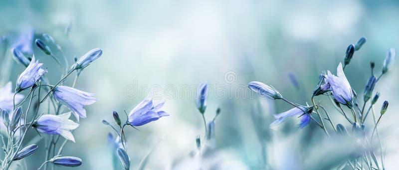 Lilac bellflowers op een vage blauwe achtergrond stock afbeelding