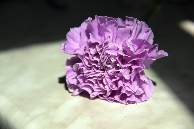 lilac bloemanjers op een grijze die lijst door rechte lijnen van harde schaduwen wordt ontworpen stock afbeeldingen