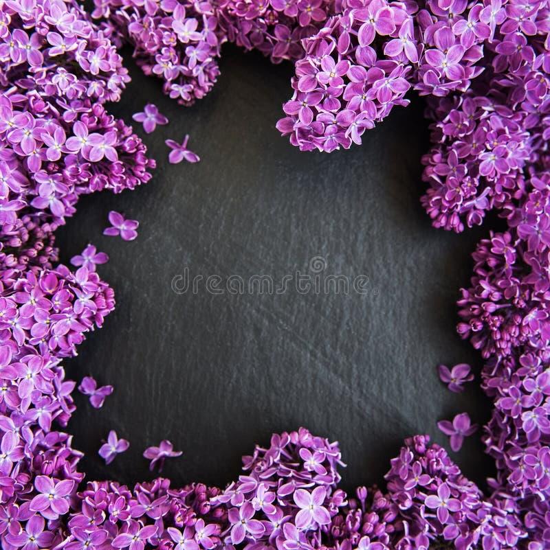Lilac bloemen als kader royalty-vrije stock afbeelding