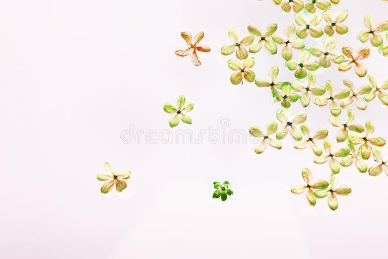 Lilac bloemen op een witte achtergrond worden opgemaakt die Het beeld van de kleur stock foto