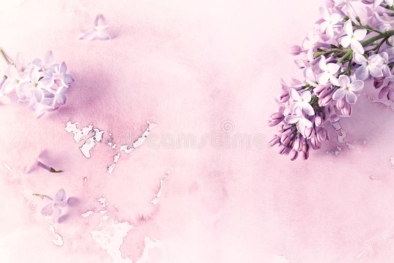 Lilac Bloemen op Waterverfachtergrond royalty-vrije stock fotografie