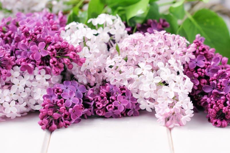 Lilac bloemenboeket stock afbeeldingen