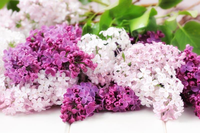 Lilac bloemenboeket royalty-vrije stock foto's