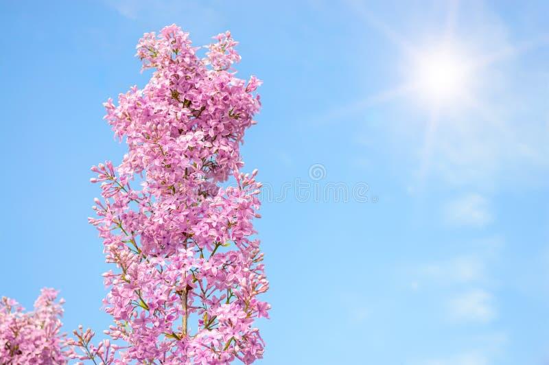 Download Lilac Bloemenclose-up Op De Blauwe Hemelachtergrond Stock Afbeelding - Afbeelding bestaande uit bloem, spring: 54089757