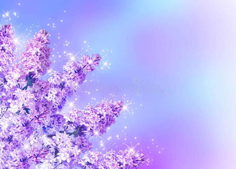 Download Lilac blossom stock illustration. Illustration of floral - 23304832