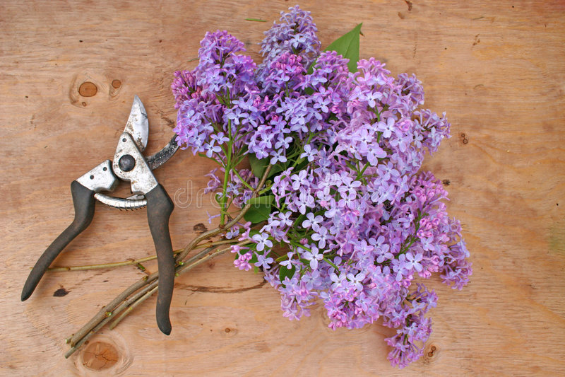 Lilac Boeket stock foto's