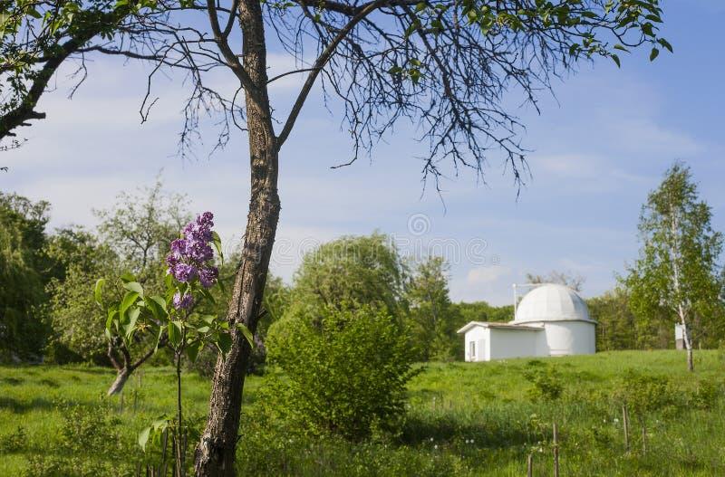 Lilac boom tegen oud Astronomisch Waarnemingscentrum, Lviv, de Oekraïne royalty-vrije stock afbeelding