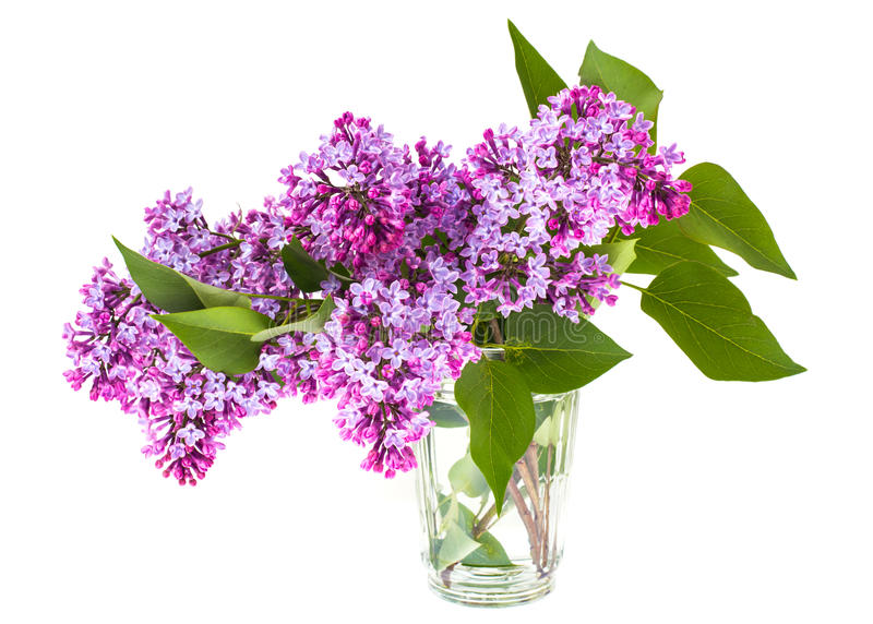 Lilac branch in the glass stock photography