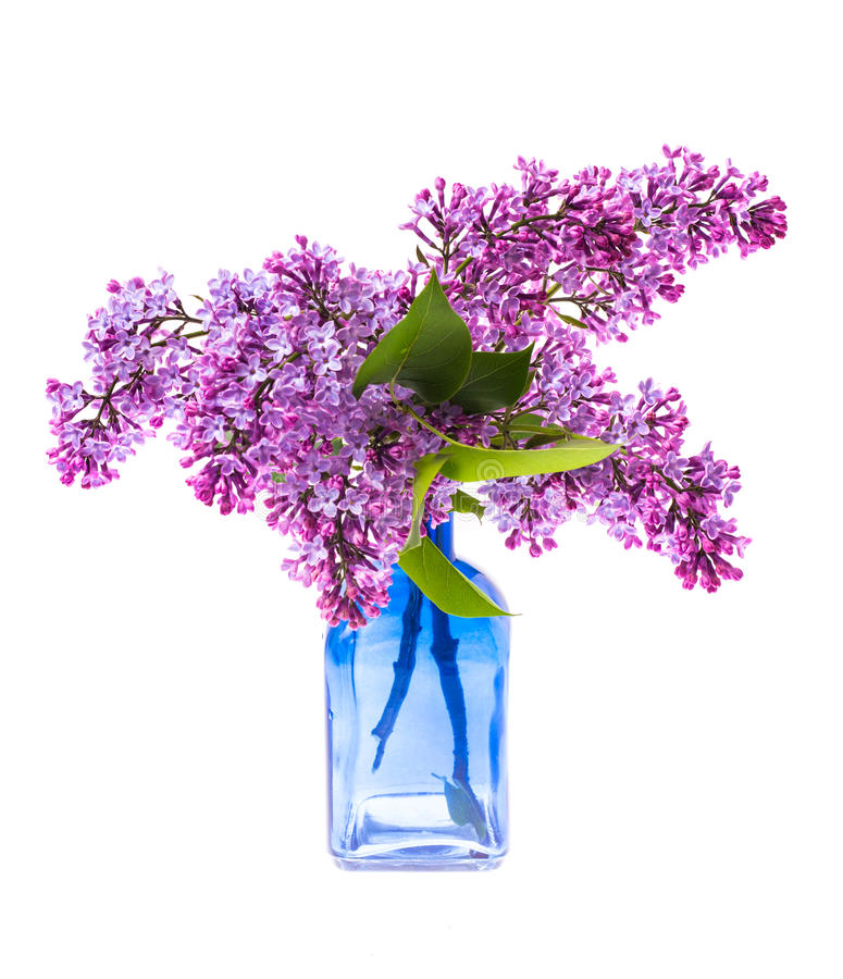 Lilac branch in the glass royalty free stock photography