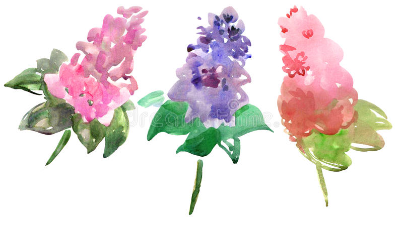 Download Lilac branches stock illustration. Image of bunch, blue - 18394484