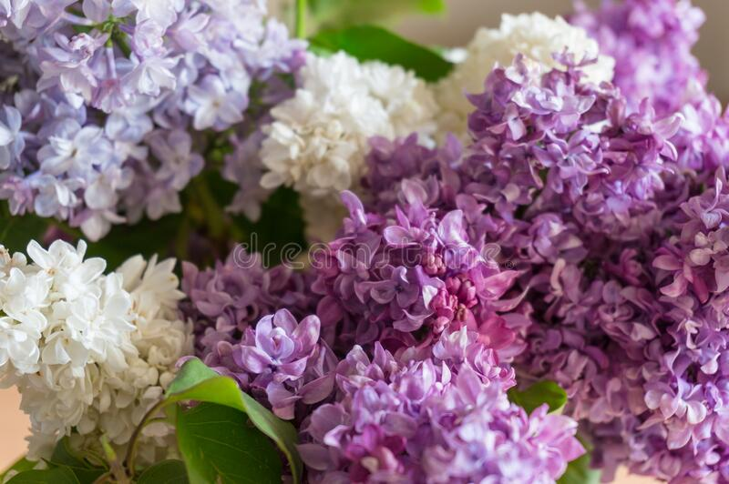 Lilac bunch of flowers close up texture royalty free stock photography
