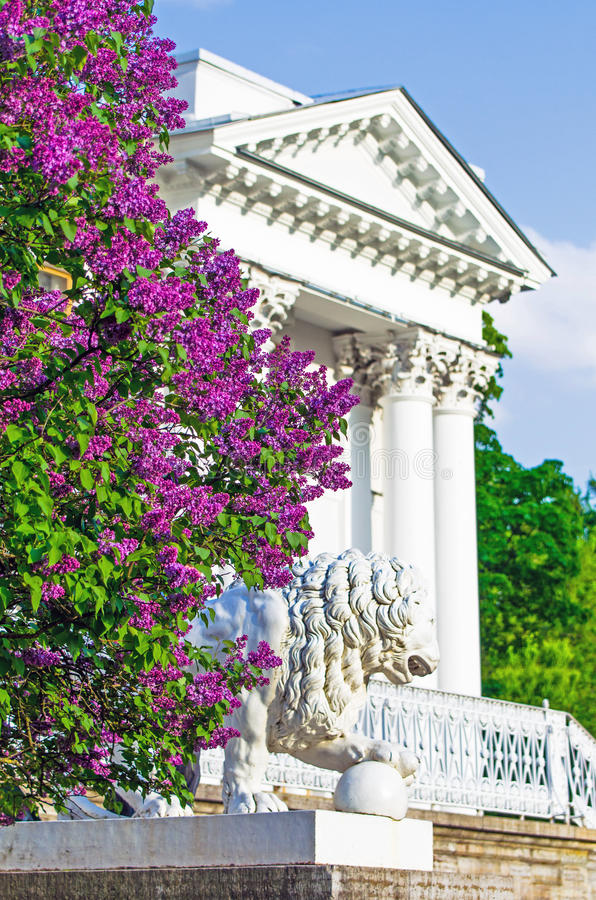 Download Lilac Bushes Building Column Palace Porch Stairs Statue Lions Park Summer Leaves Flowers Trees Forest Beauty Stock Photo - Image of history, garden: 85268578