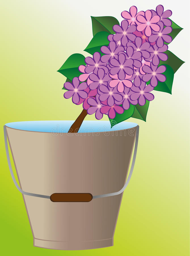 Lilac In Container Royalty Free Stock Image