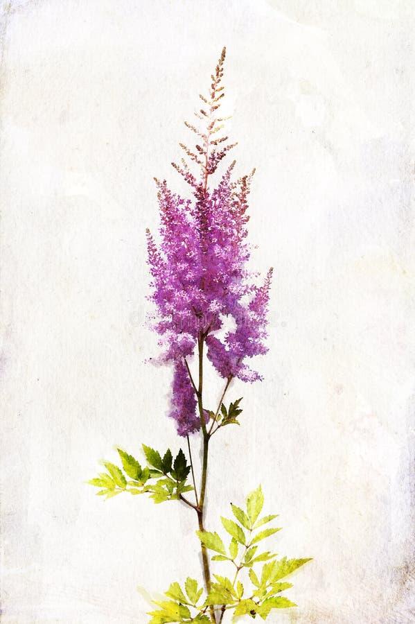 Lilac da aguarela ilustração do vetor