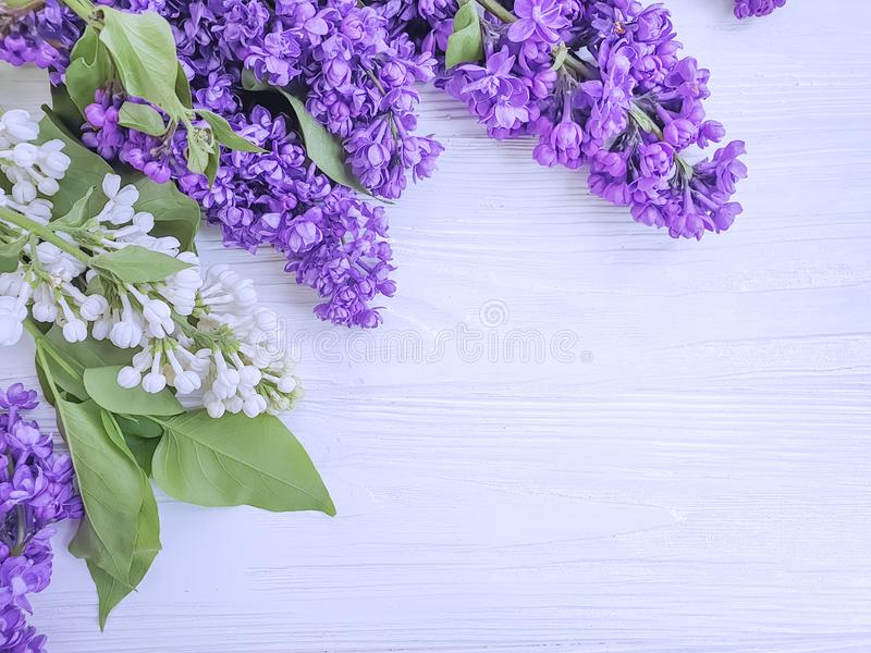 Lilac flower beautiful on white wooden background season birthday. Lilac flower  beautiful  white wooden background season birthday royalty free stock photos