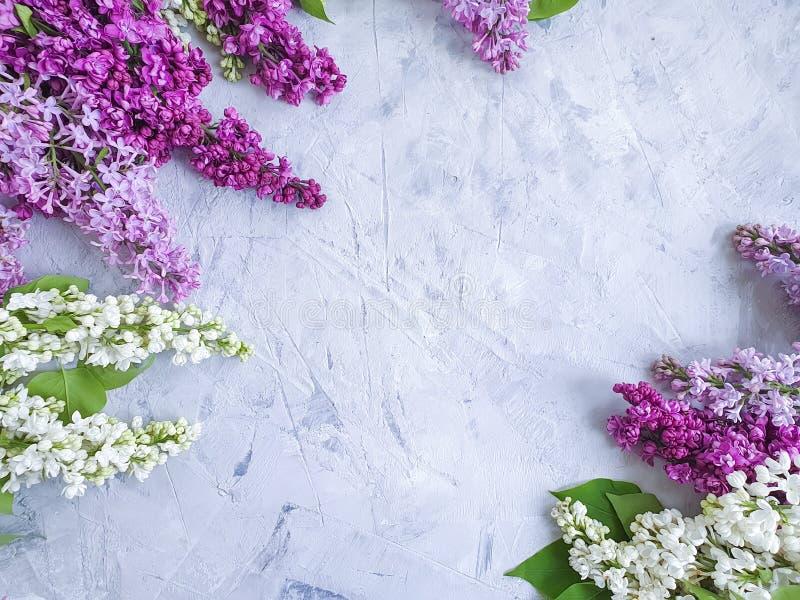 Lilac flower on concrete frame background design bouquet. Celebration stock photo
