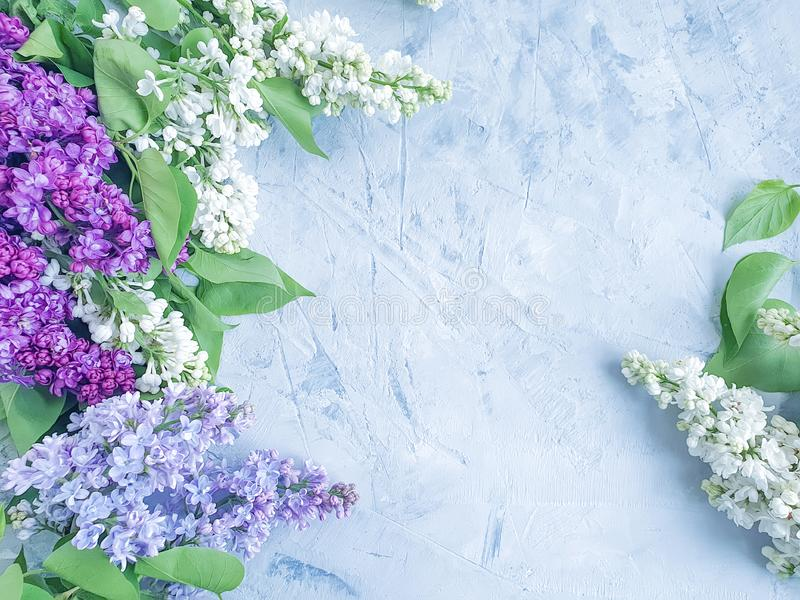 Lilac flower on gray concrete background frame design. Lilac flower gray concrete background frame design stock image