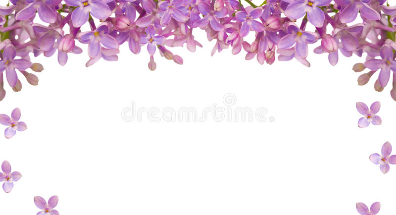 Download Lilac Flower Isolated Frame Stock Photo - Image of lilac, nature: 23850508