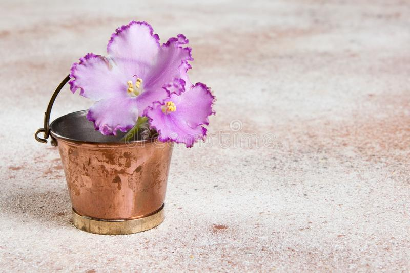 Lilac flower violet in vintage copper bucket. On concrete background. Copy space for text royalty free stock photo