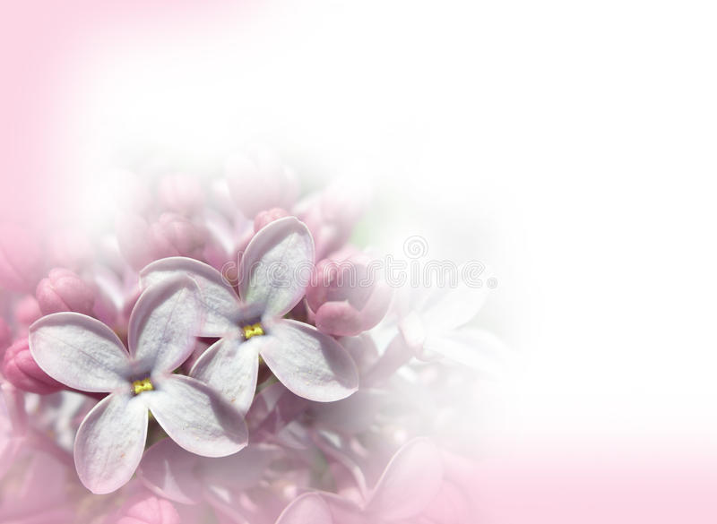 Lilac Flowers Background romantic vector illustration