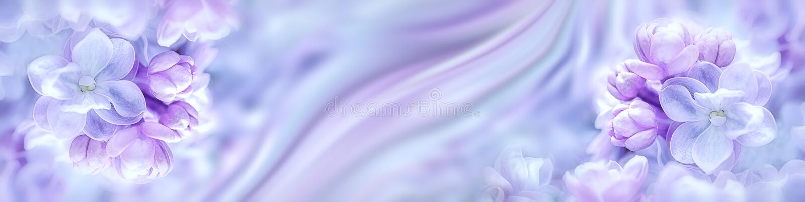 Lilac flowers bloom branch panorama stock photography