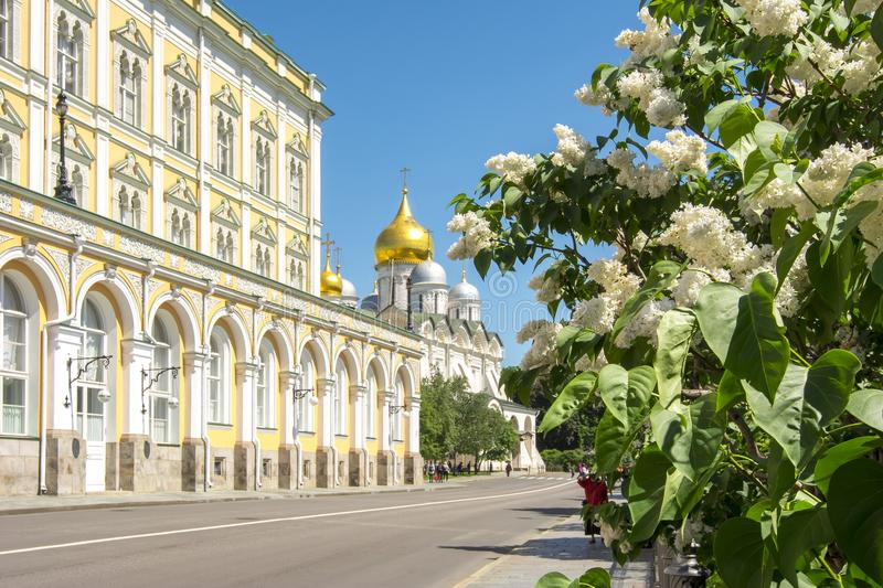 Lilac flowers blooming in Moscow Kremlin, Russia royalty free stock image