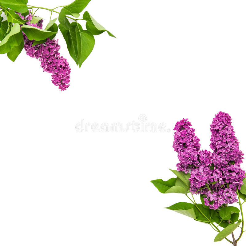 Lilac flowers bouquet. Spring blooms stock images