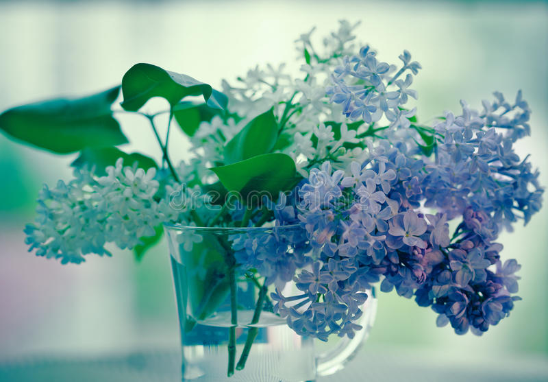Lilac flowers in glass royalty free stock photos