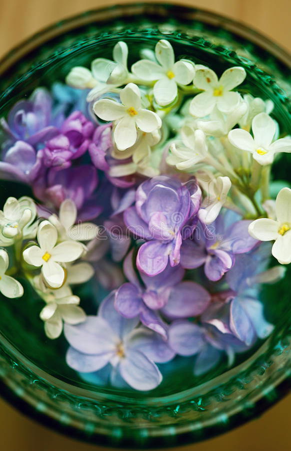 Lilac flowers in glass. stock image