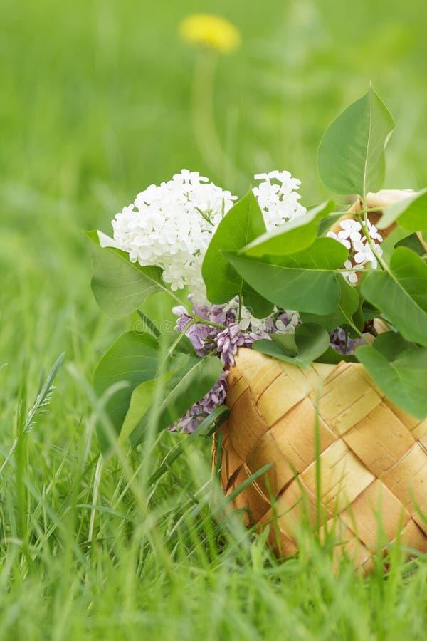 Free Lilac Flowers In Birchbark Basket On Grass Royalty Free Stock Image - 31451356