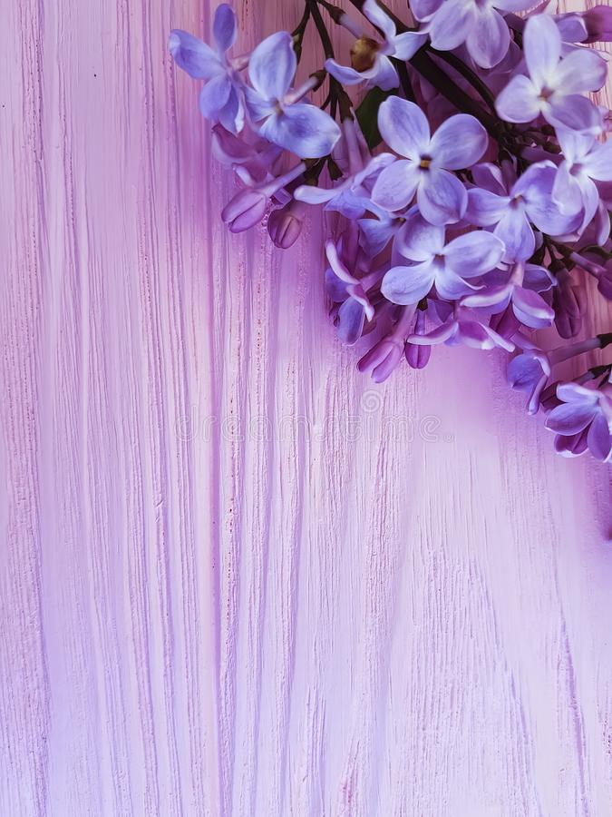 Lilac flowers composition color pink wooden background beautiful. Lilac flowers pink wooden background blooming decoration design composition season arrangement royalty free stock photo