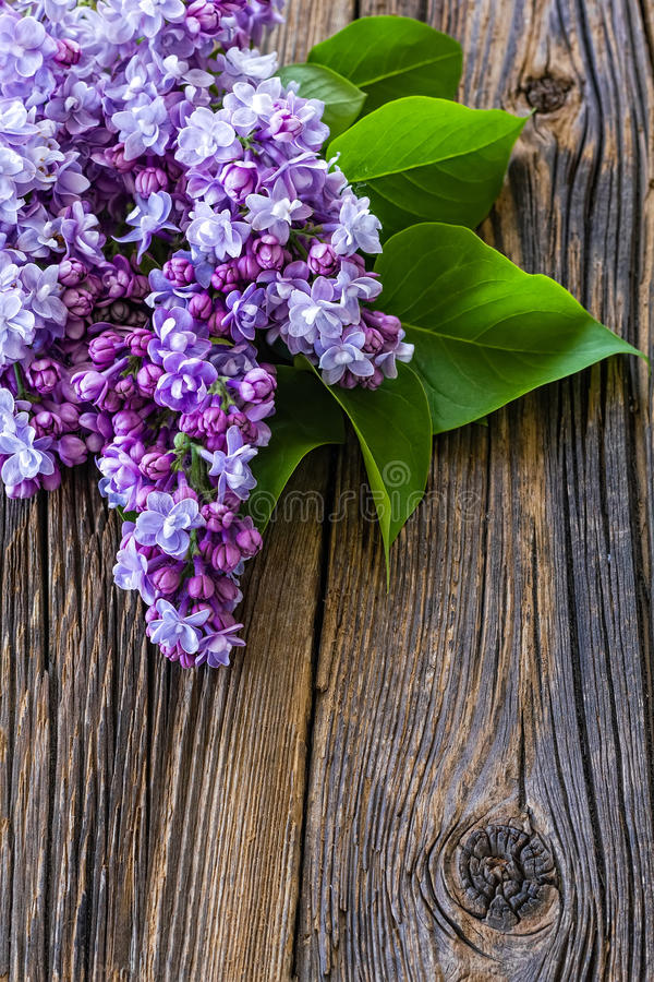 Lilac flowers. On wooden background royalty free stock image
