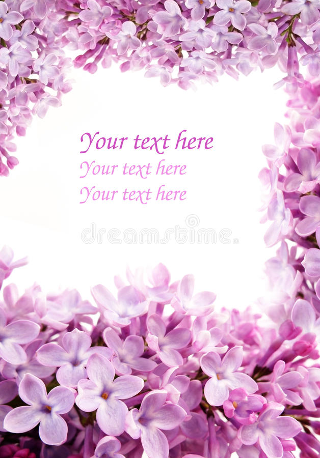 Lilac frame royalty free stock photos