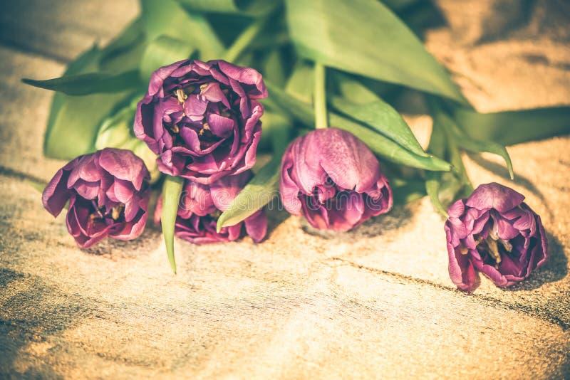 Lilac gevoelige tulpenbloemen op gouden document achtergrond Het wachten op de lente Gelukkige Pasen kaart stock foto