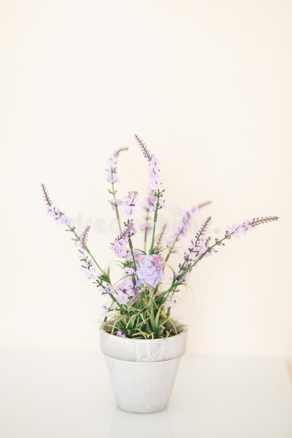 Lilac Potted Flowers royalty free stock photography