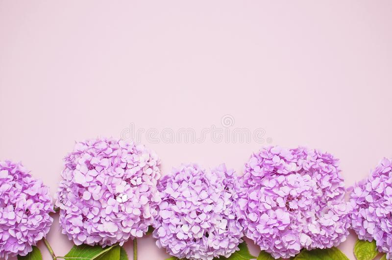 Lilac pink hydrangea flower on pastel pink background flat lay. Mothers Day, Birthday, Valentines Day, Womens Day. Celebration concept Top view Floral royalty free stock photography