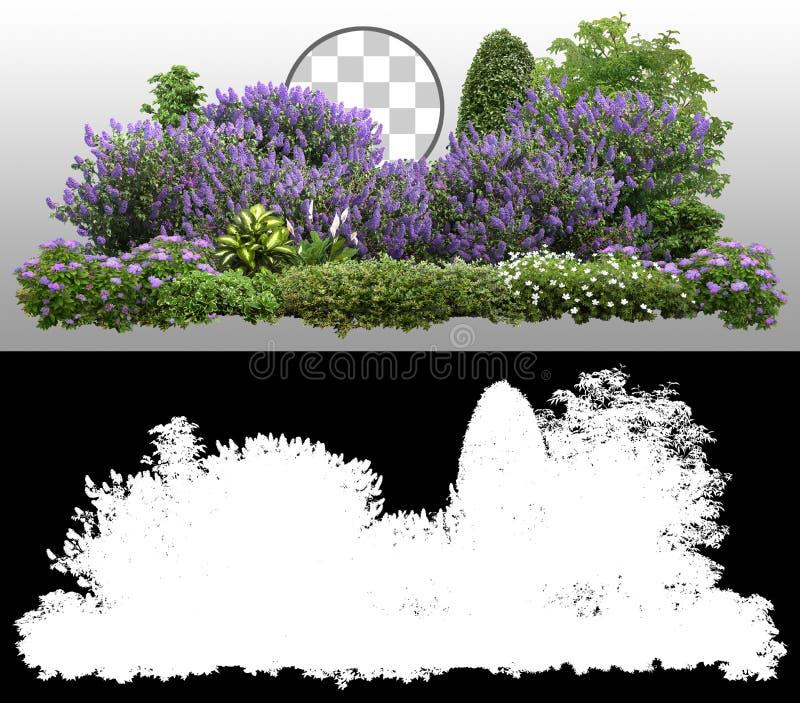 Lilac Plantes de couverture et fleurs image stock