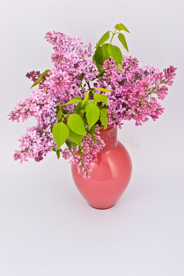 Lilac roxo fotografia de stock royalty free