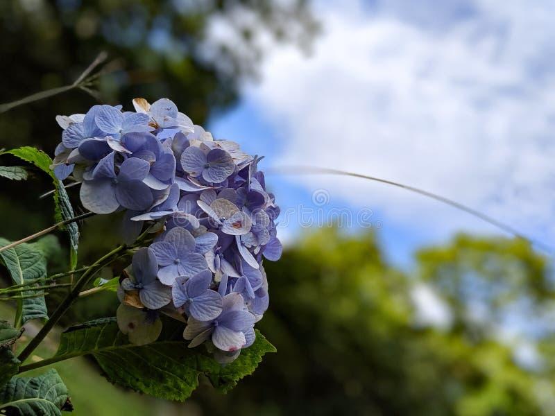 Lilac skies fotografering för bildbyråer