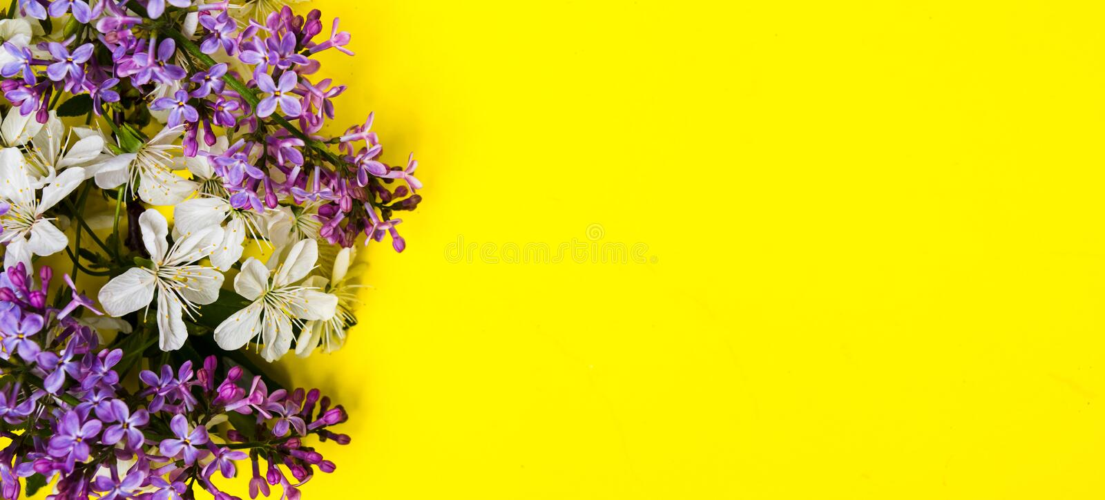 Lilac and spring blossom flowers on yellow background stock photo