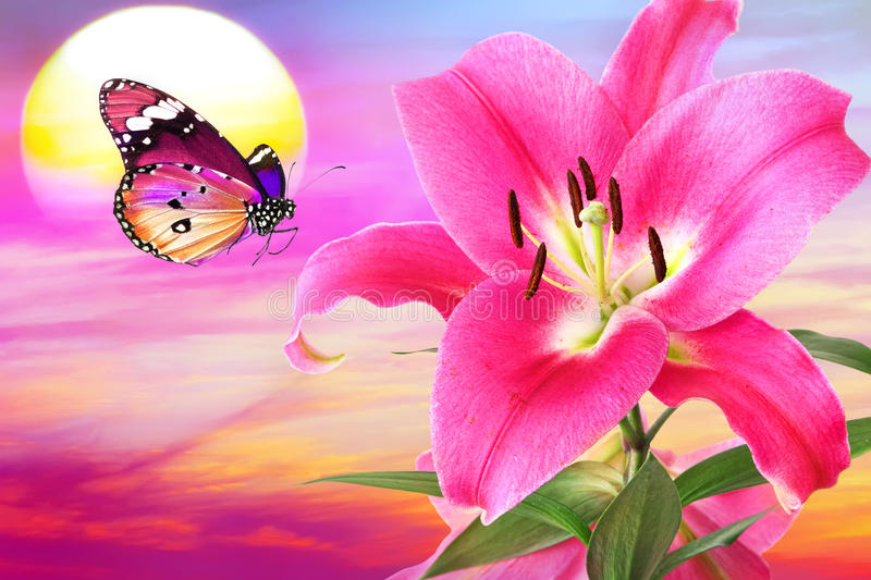 Lilac sunset fantasy. Flower of a beautiful pink royal lily and lilac butterfly against colorful sun sky sunsen/sunrise royalty free stock photography